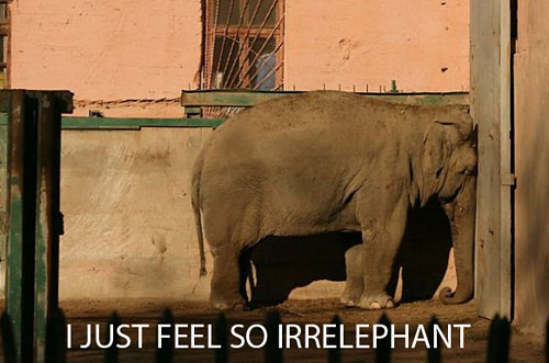 funny-sad-elephant-crying